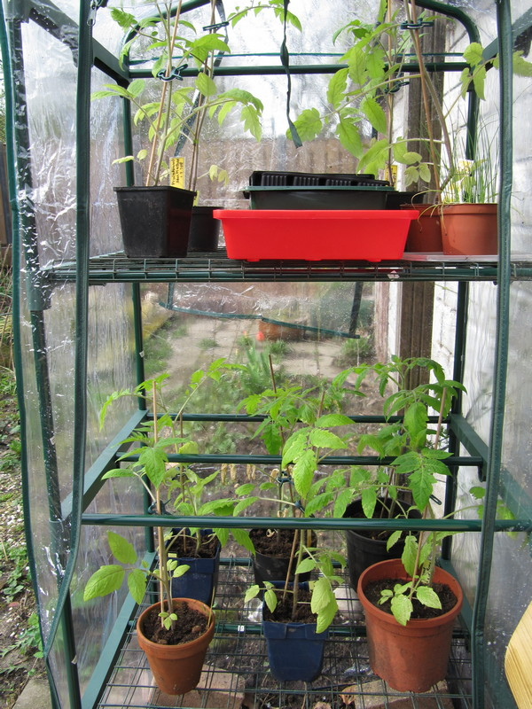 april tomaten in grote kast
